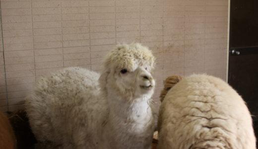 【お子様連れにオススメ】鳥取県にある大山トムソーヤ牧場、動物とふれ合える牧場でした!