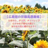 【広島県の世羅高原農場】ひまわり、ダリア、チューリップ、小さなお子様も大喜び!みんなで花に癒されよう!